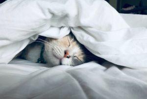 睡眠の科学